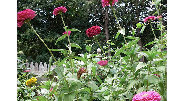 Small Space Garden Ideas