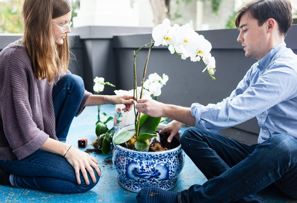 To create their orchid arrangement, Kate and Alex formed channels in the basin of a large chinoiserie tureen with Styrofoam, then tucked the orchids, still in their plastic containers, in the holes. They topped everything off with moss to hide the plastic.