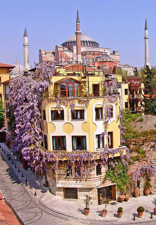The hotel our team most wanted to move into? The wisteria-covered Empress Zoe, which sits nearly in the shadow of mosque-turned-museum Hagia Sophia. Photo courtesy of Empress Zoe