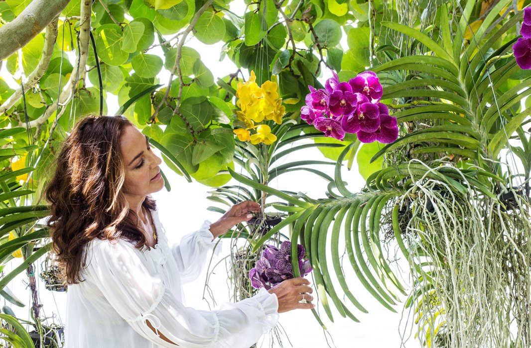 Many cultivated orchids are epiphytes, plants that don't need to root in soil and can grow on another plant without harming it. Kelly buys them at the farms that abound in Florida and installs them on the trees in her backyard.