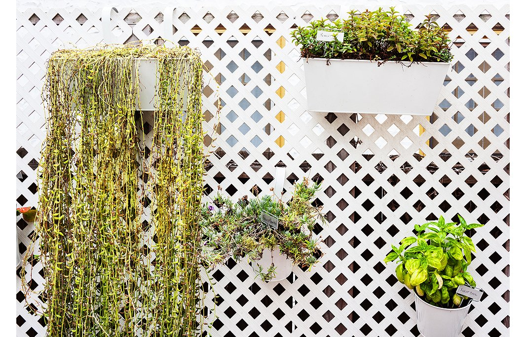 To avoid crowding her outdoor space, Morris used the trellis for hanging pots filled with herbs, berries, and succulents.