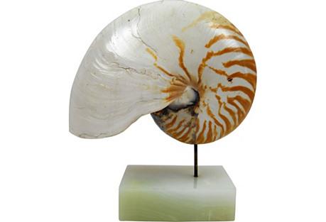 Nautilus Shell on Marble Base
