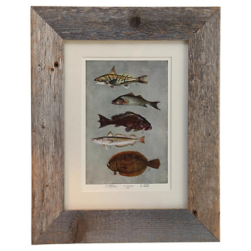Framed Print of Sea Life