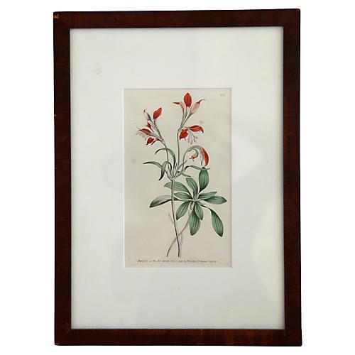 Victorian Botanical Engraving