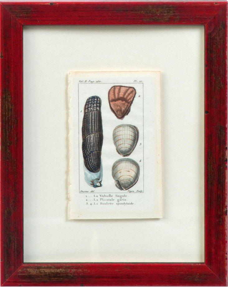 18th-C. Shell Engraving