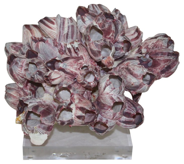 Barnacles on Lucite  Base