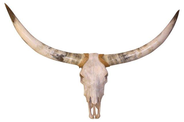Watusi Longhorns, 5'