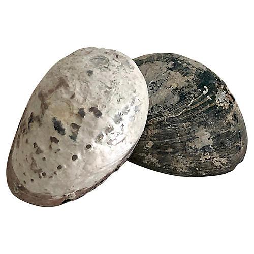 Black & White Abalone Shells, S/2