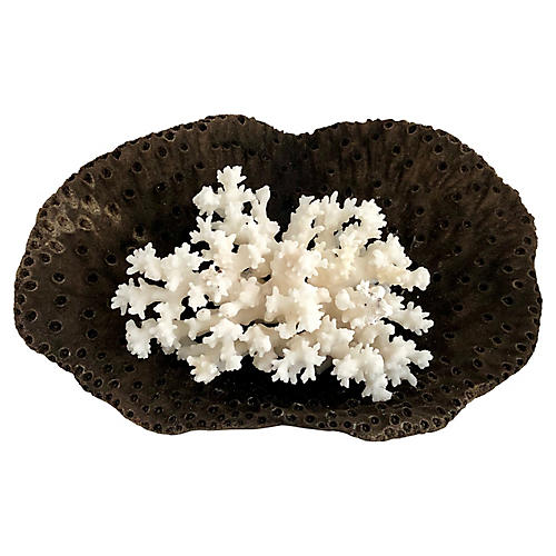 Black & White Coral Grouping, S/2
