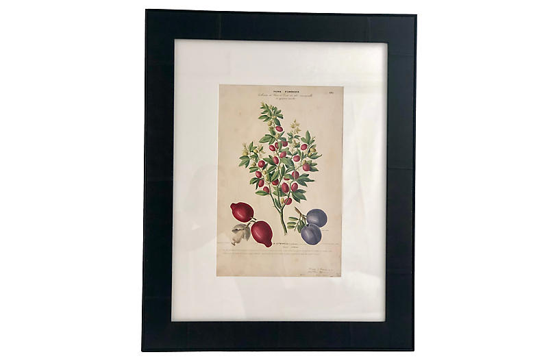 1843 Hand-Colored French Botanical Print