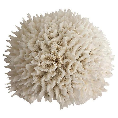 Natural White Lettuce Coral