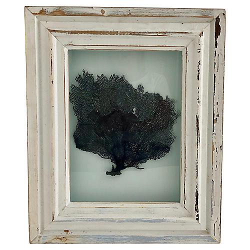 Framed Natural Sea Fan