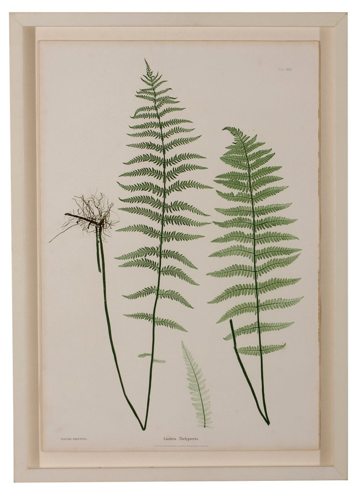 Nature Print of a   Fern
