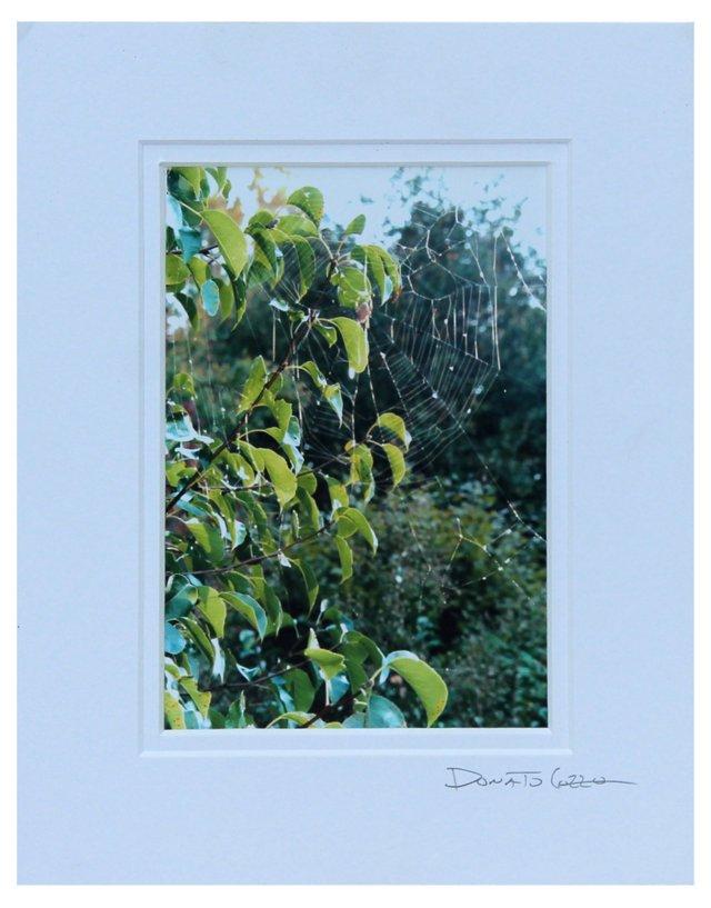 Spring by Donato Cozzo