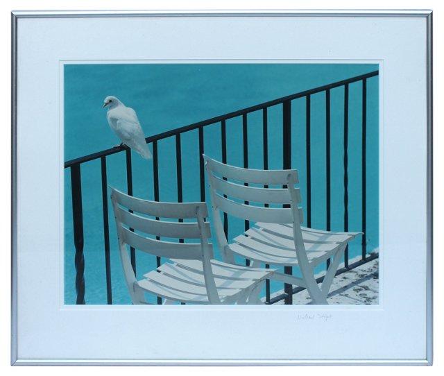 White Dove by Michael Stipak