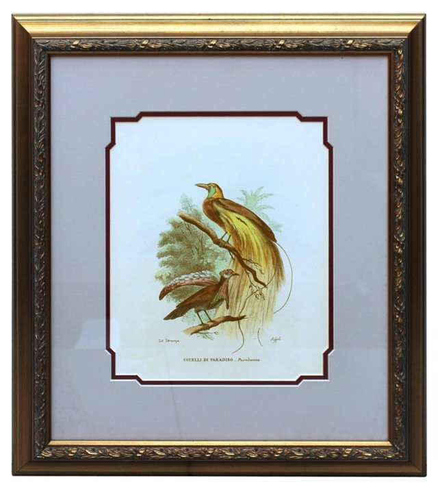 Bird of Paradise by Gualtiero Boschi