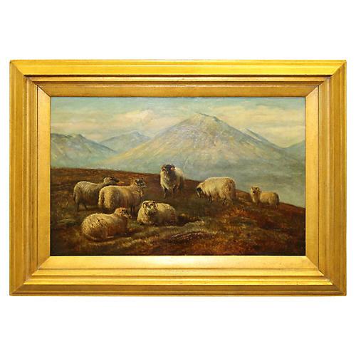 Highlands Sheep by Charles Jones
