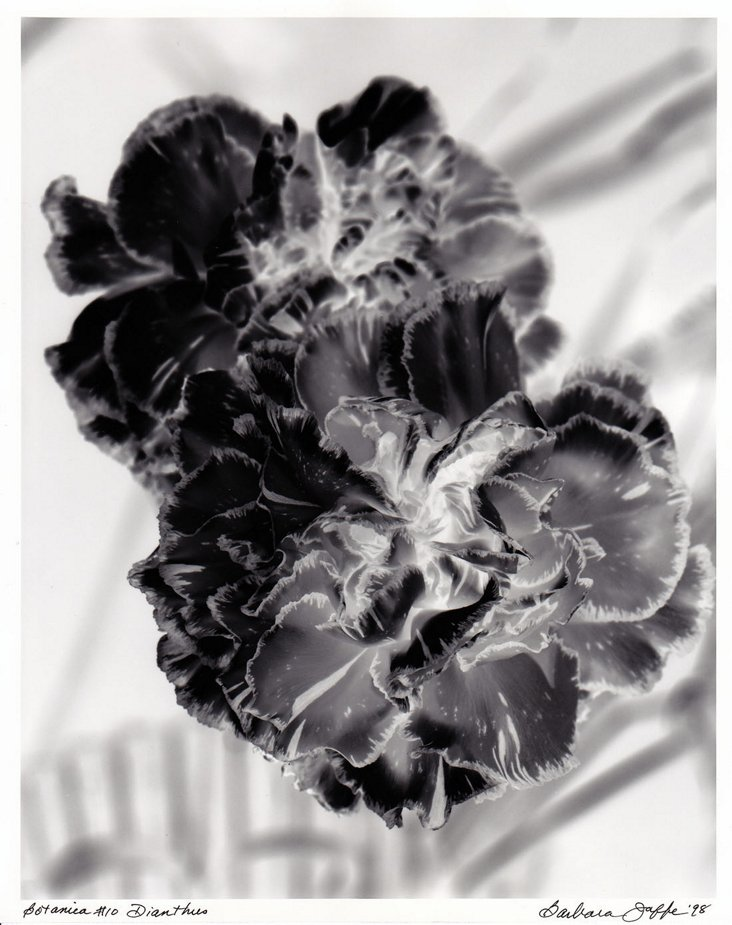 Signed Floral Photograph, 1998