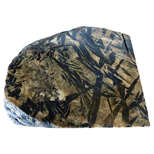 Fossil Stone Specimen
