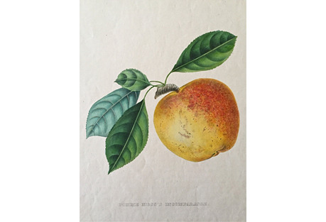 19th-C. French Lithograph Fruit