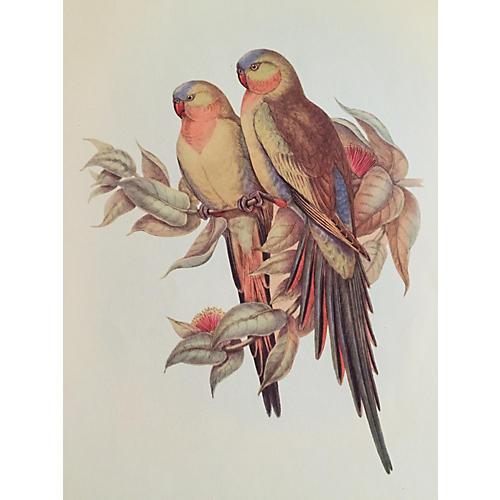 Lithograph Parrots Camilla Lucas