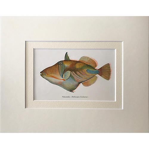 Hawaiian Fish Print