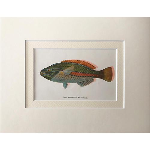 Hawaiian Fish Lithograph