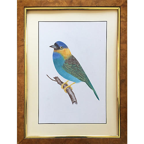 Vintage Oil Painting of a Tropical Bird