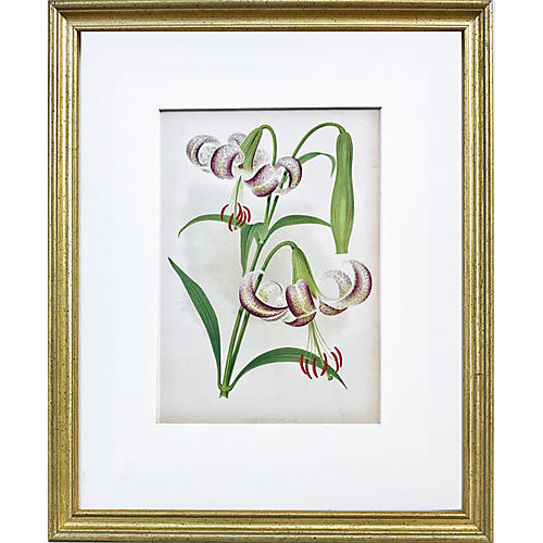 19th-C. The Garden Lily