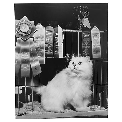 Photograph of Prize-Winning Cat, 1961