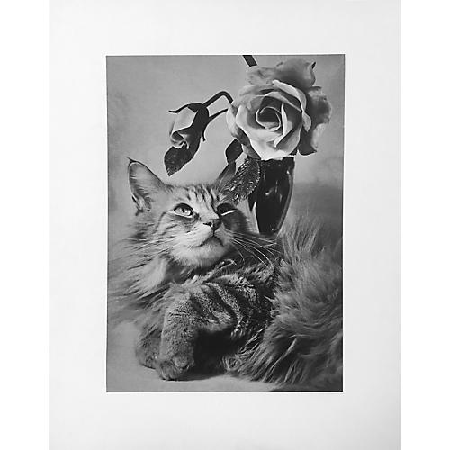 Cat w/ Roses by R. McNitt, 1961