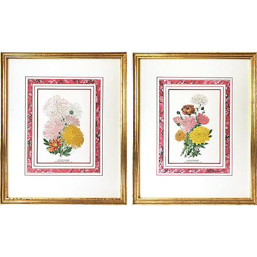 Antique English Botanical Prints, Pair