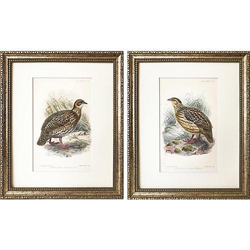1890 Ornithological Bird Prints, S/2