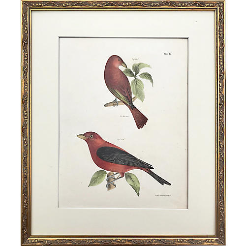 19th-C. Hand-Colored Bird Lithograph