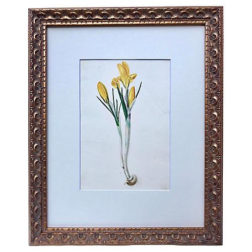 Antique Watercolor Floral Botanical