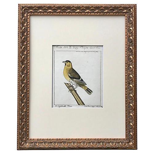 Antique Watercolor of a Bird 1796