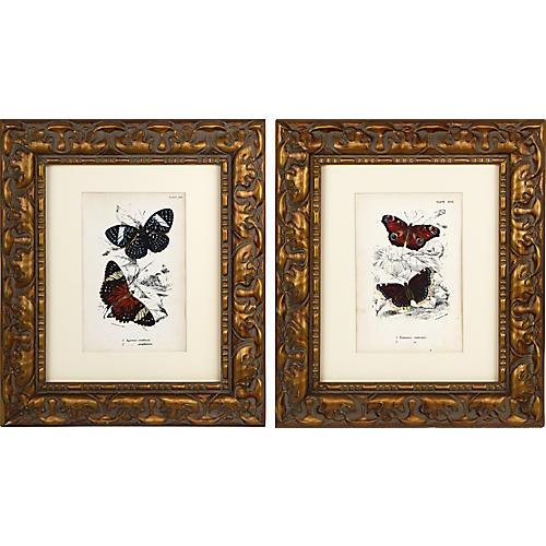 19th C English Butterfly Prints 1897 /pr