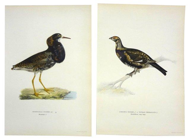 Swedish       Bird       Prints, Pair
