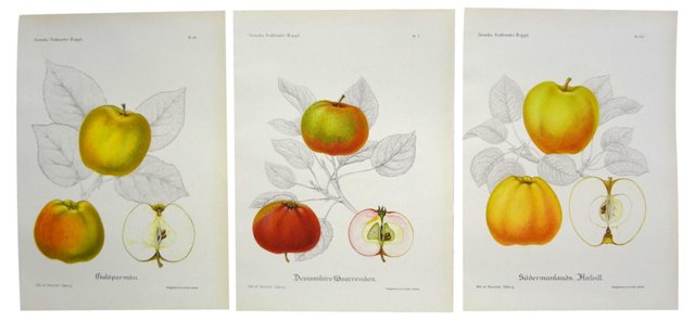 Swedish   Fruit    Prints, S/3