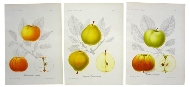 Swedish Fruit Prints, Set of 3