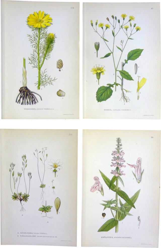Swedish Floral Lithographs, S/4