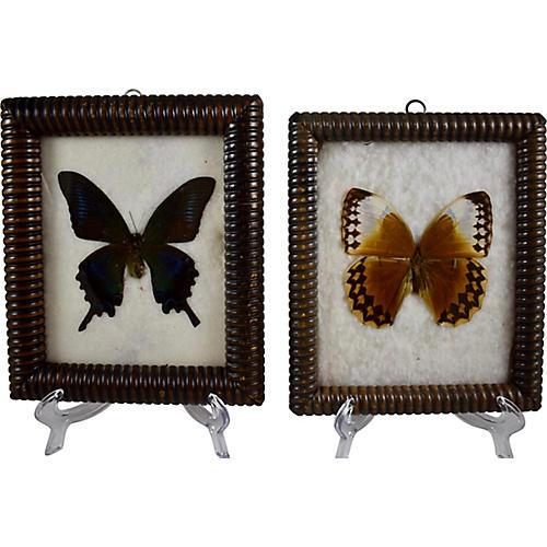 Bobbin Framed Mounted Butterflies, S/2