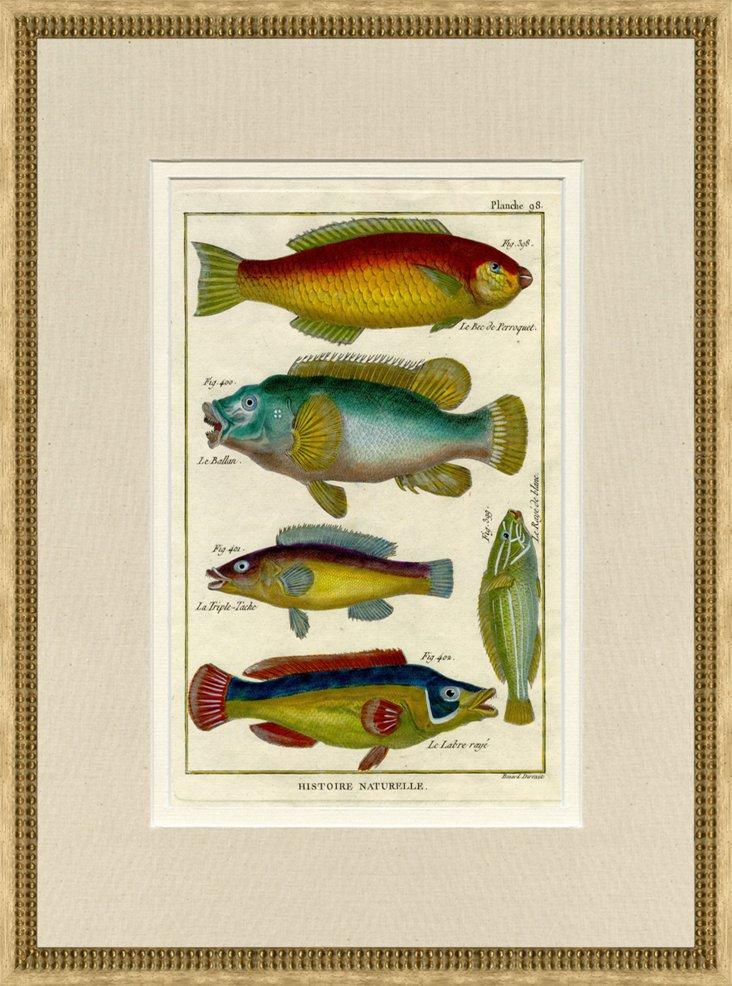 1750s Fish Print, Pl. 98