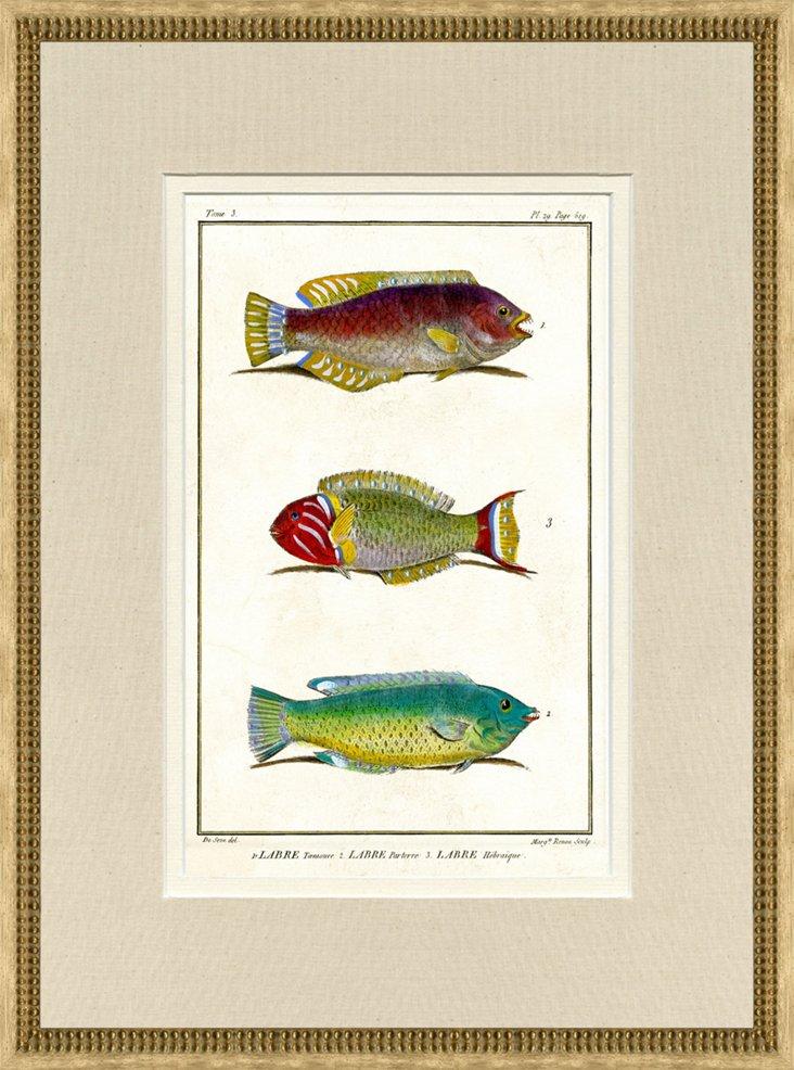 1750s de Seve Fish Print, Pl. 29