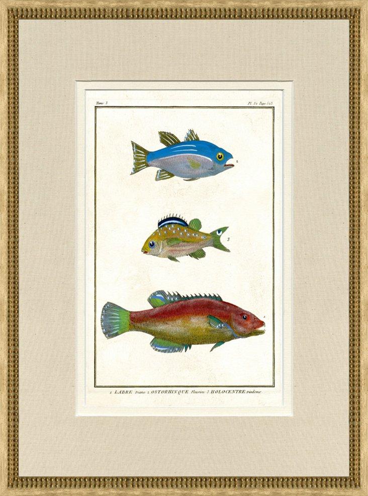 1750s de Seve Fish Print, Pl. 32