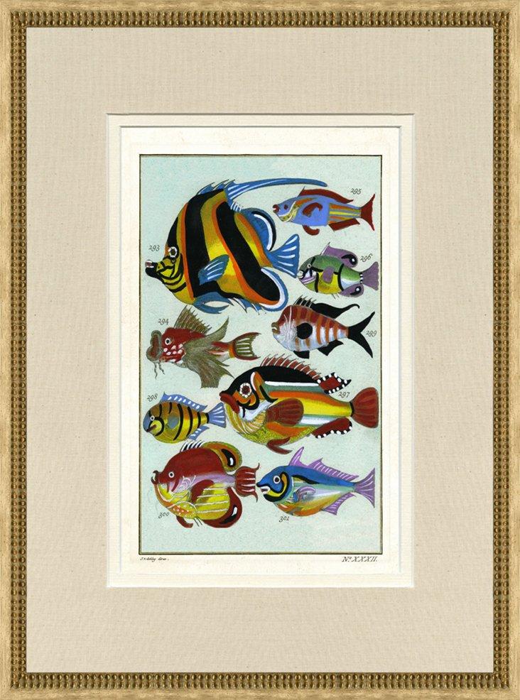 1750s J.V. Schley Fish Print, Pl. 32