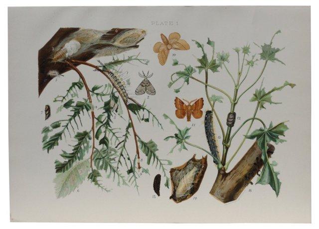 Butterflies in Nature Print