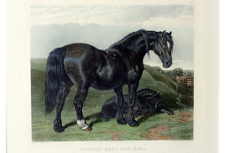 Draught Mare & Foal Print
