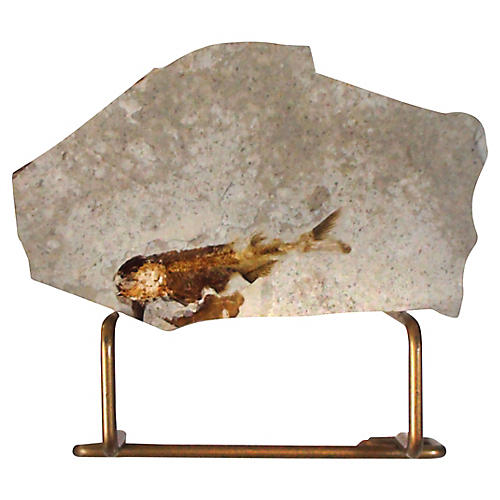 Fossil Specimen On Stand