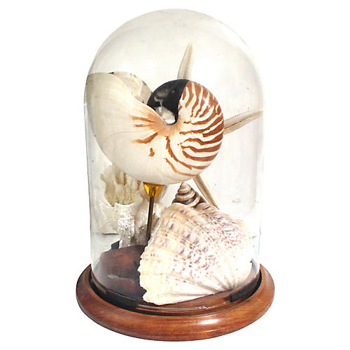 19th-C. Cloche W/ Seashells